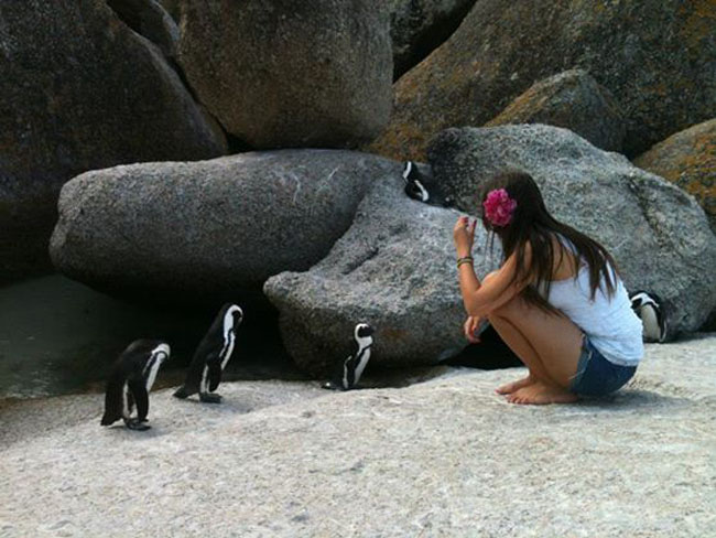 13 africa-do-sul-alessandra-stockler-just-cool-pinguins1